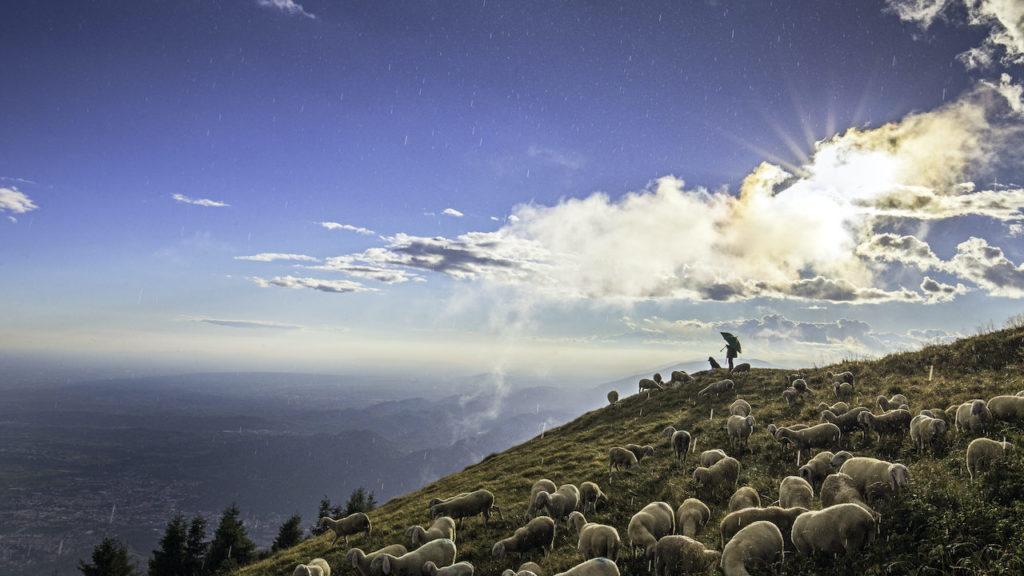 9911 Pastore e pecore sotto la pioggia